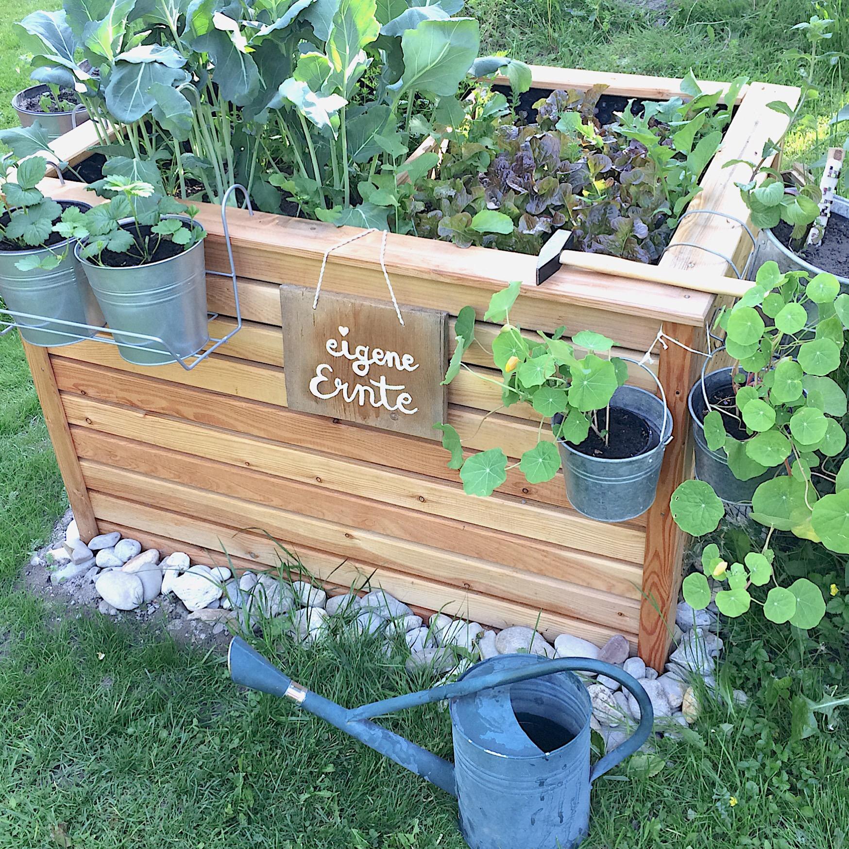 Hochbeet Gartensaison 2016 Glutenfreie Rezepte Kreative Ideen