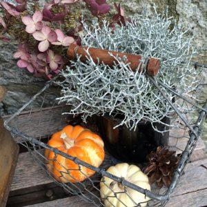 Herbst Deko Vintage 2016