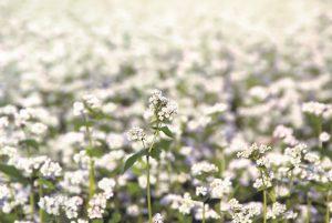 Blumenbrot glutenfrei